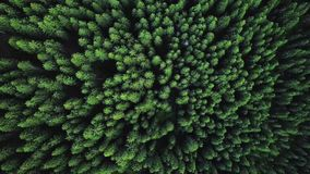Drone flies the greens over the trees stock video footage