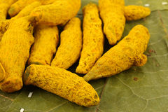Lots of turmeric barks Royalty Free Stock Image