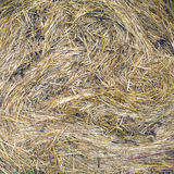 Lots of twisted dry hay closeup Royalty Free Stock Image