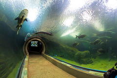 Lots Unterwasserseegeschöpfe lizenzfreie stockfotografie