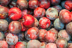 Lots of unwashed plums. Royalty Free Stock Photos