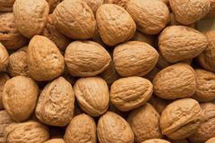 Lots of walnuts Royalty Free Stock Photos