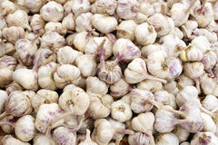 Italian Garlic Bulbs Stock Photo