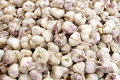Italian Garlic Bulbs Stock Photo