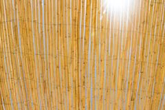 Lots of yellow dry bamboo sticks tied together with blue sky and sun flares in the background. Sunlight royalty free stock photography