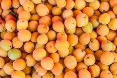 Lots of yellow peaches Stock Photo