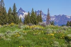 Lotsa och indexera maximalt i de Beartooth bergen Royaltyfria Bilder
