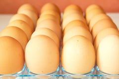 Lott av ägg i rad, perspektivsikt Royaltyfria Foton