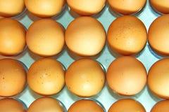 Lott av ägg i rad, plansikt Royaltyfri Bild