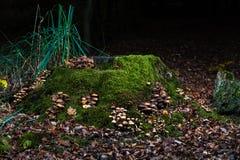 Lott av champinjoner på en trädstam i skog arkivbild