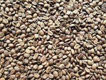 lott av grillad kaffebönor, bakgrund och textur royaltyfria foton