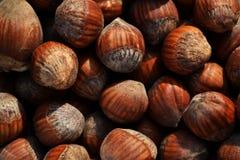 Lott av hasselnötter i skalet royaltyfri foto