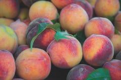 Lott av mogna persikor arkivbild