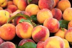 Lott av mogna persikor arkivbilder