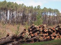Lott av trä Arkivfoton