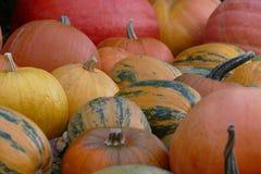 Lott av trevliga färgrika halloween pumpor Arkivbilder