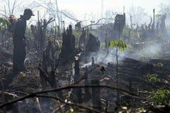 Lotta del fuoco Fotografia Stock Libera da Diritti