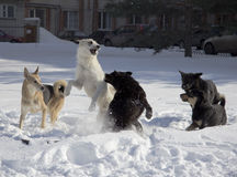 Lotta di cane immagini stock libere da diritti