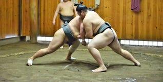 Lottatori di sumo che si preparano nelle stalle di sumo immagini stock libere da diritti