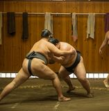 Lottatori di sumo che si preparano nelle stalle di sumo fotografie stock libere da diritti