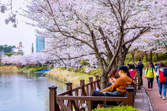Lotte World amusement park and cherry blossom of Spring, a major tourist attraction in Seoul, South Korea. Stock Image
