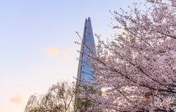 : Lotte World Tower med den körsbärsröda blomningen arkivfoto