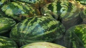 Lotten av stora vattenmelon ligger i vattnet Sommar bär frukt bakgrund stock video