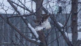 Lotti dei passeri sul cibo dell'albero stock footage