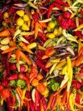 Lotti dei peperoni, nelle varietà e nei colori differenti Immagine Stock