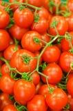 Lotti dei pomodori rossi Fotografia Stock Libera da Diritti