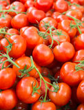 Lotti dei pomodori rossi maturi accatastati Fotografie Stock Libere da Diritti