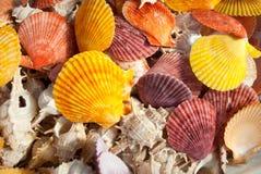 Lotti dei seashells. Fotografia Stock