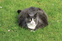 Lotti del gatto nel giardino Immagine Stock