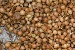 Lotti della erba cipollina Fotografia Stock Libera da Diritti