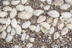 Lotti delle conchiglie sulla sabbia come fondo Fotografia Stock Libera da Diritti