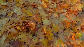 Lotti delle foglie gialle sulla terra in autunno archivi video