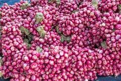 Lotti delle lampadine rosse degli scalogni su esposizione da vendere ad un mercato all'aperto degli agricoltori Immagini Stock Libere da Diritti