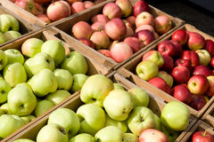 Lotti delle mele Immagini Stock