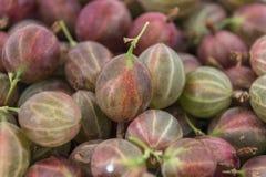 Lotti di goosberry verde nei precedenti fotografia stock libera da diritti