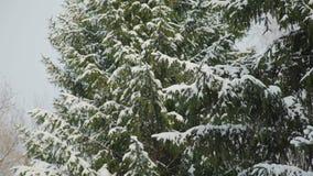 Lotti di neve sugli alberi video d archivio