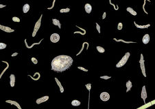 Lotti di vari microrganismi Fotografie Stock