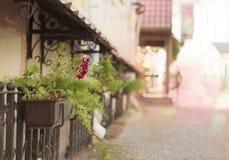 Lotto dei fiori in vaso immagini stock libere da diritti