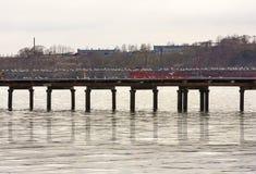 Lotto dei gabbiani di mare sul pilastro su una mattina grigia e fredda Immagini Stock