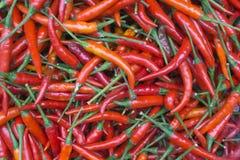 Lotto dei peperoncini rossi Fotografie Stock