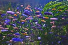 Lotto dei pesci Fotografie Stock Libere da Diritti
