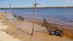 Lotto del pesce del fiume nella gabbia archivi video
