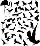 Lotto delle siluette degli uccelli Fotografia Stock Libera da Diritti
