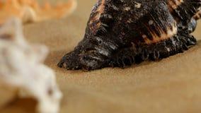 Lotto delle stelle marine differenti dello shellsand del mare sulla spiaggia stock footage