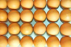 Lotto delle uova in una fila, vista di piano Immagine Stock Libera da Diritti