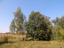 Lotto di terreno boschivo su un cielo blu del fondo fotografia stock